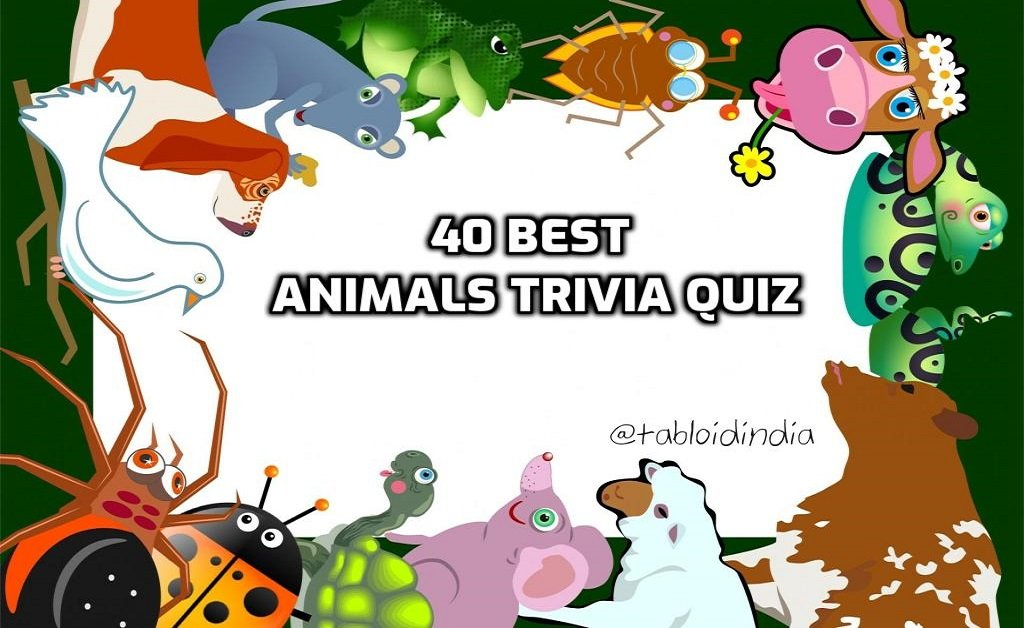 40 Animal Trivia Questions with Answers