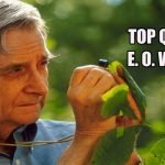 34 Famous Quotes on Nature by E. O. Wilson